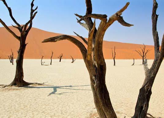 Namibia_Desert_with_dead_trees_shutterstock_336156464.jpg
