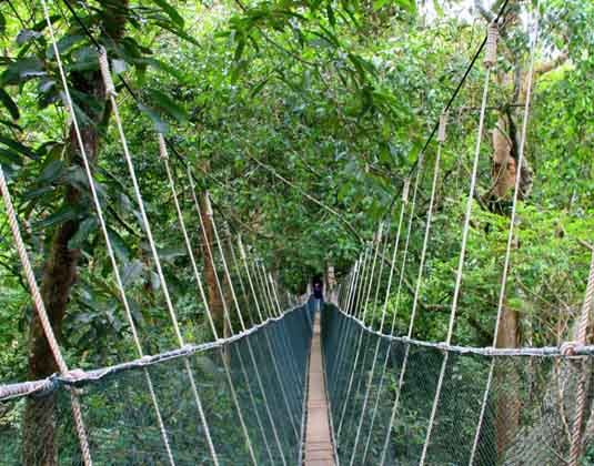 Canopy walk Poring Hot Springs