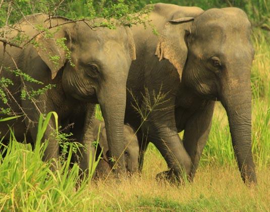Sri Lanka City, National Park & Beach Holidays