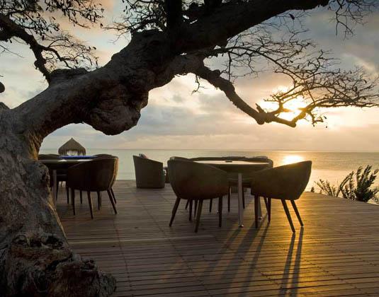 Dugong Beach Lodge - Tree