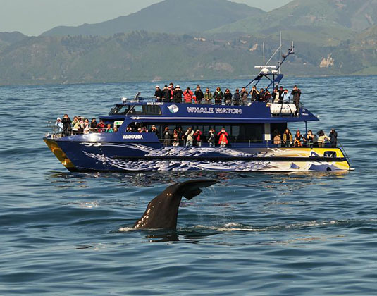 Kaikoura_Whale_Watch_Bboat_and_Whale.jpg