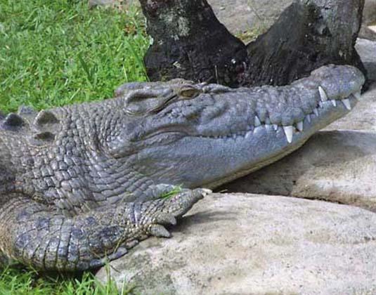 Australia Zoo excursion