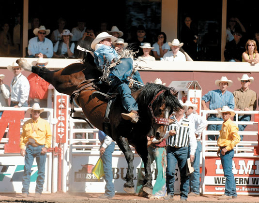 Calgary Stampede - Rodeo Rider