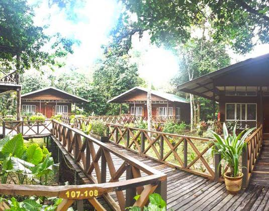 Borneo_Nature_Lodge_-_Walkway.jpg