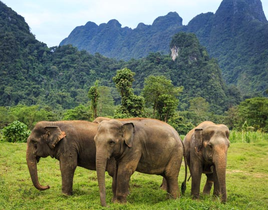 Elephant_Hills_Luxury_Tented_Camp_Khao_Sok_National_Park_Thailand_-_Elephant_Experience.jpg