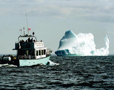 Iceberg, Whale and Seabird Tour excursion