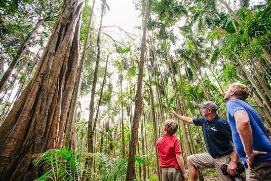 Mount Tamborine Tour excursion