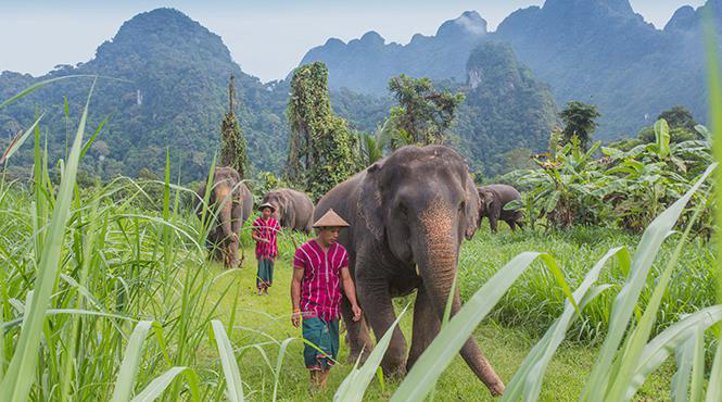 Wildlife and laid-back adventure await you at Elephant Hills