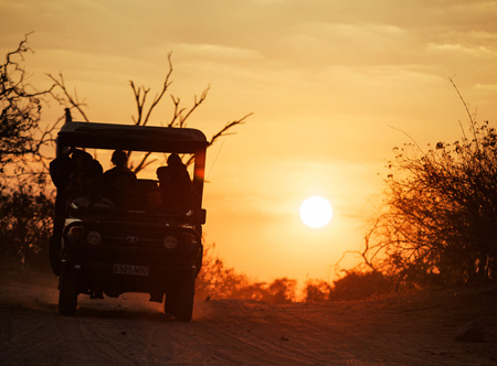 Sunset_Safari.jpg