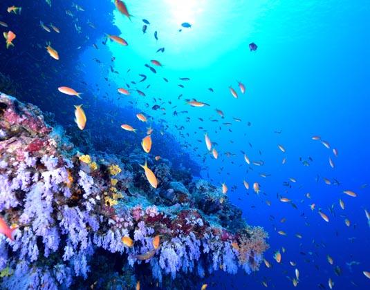 Ningaloo_Reef.jpg