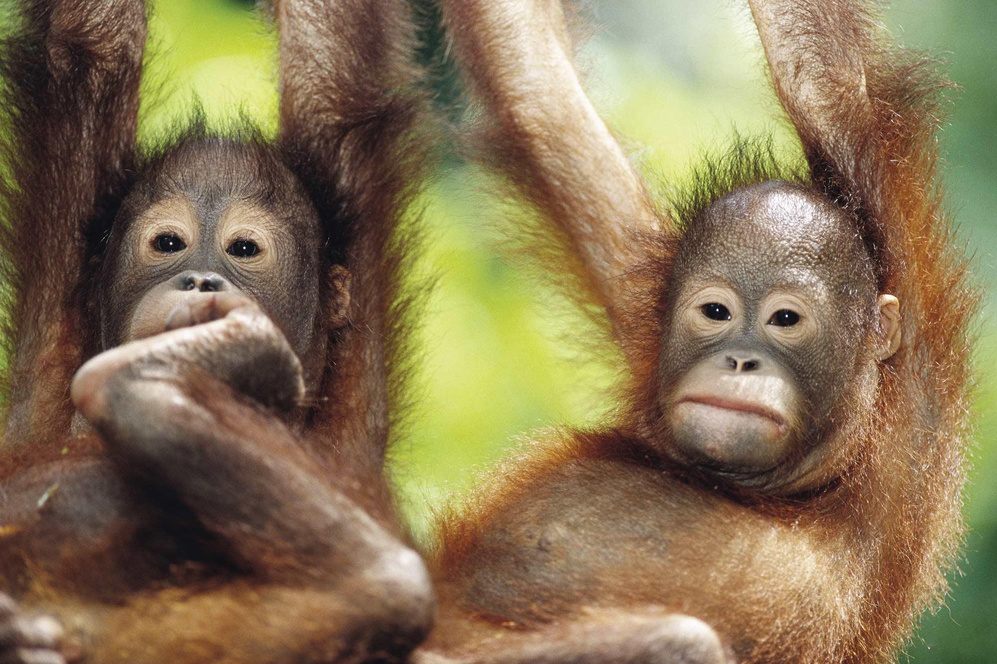Singapore, Borneo & Dubai Holidays