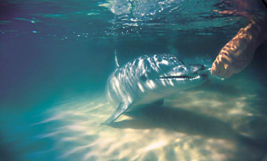 Tangalooma_Dolphin-Feeding-Underwater.jpg