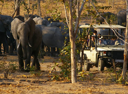 game-drive-with-elephants.jpg