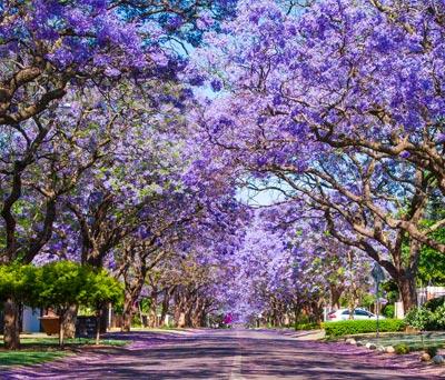 Jo'burg & Pretoria