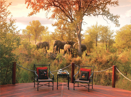 Hoyo_hoyo_safari_lodge_game_viewing.jpg
