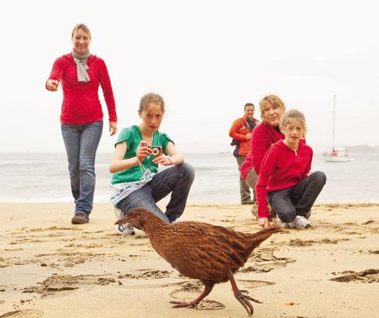 Family_with_bird_on_beach_at_Stewart_Island_Dunedin,_Invercargill_and_Stewart.jpg