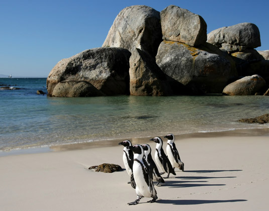 Boulders_Beach_cape_and_caost.jpg