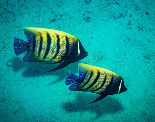 EAST_Koh_Tao,_fish.jpg