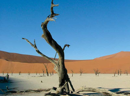 1544_1_Dead_Tree.jpg