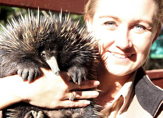 Currumbin Wildlife & Segway Safari excursion