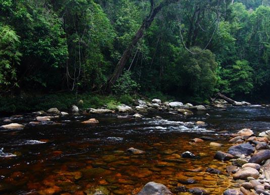 Taman_Negara,_Tahan_river.jpg
