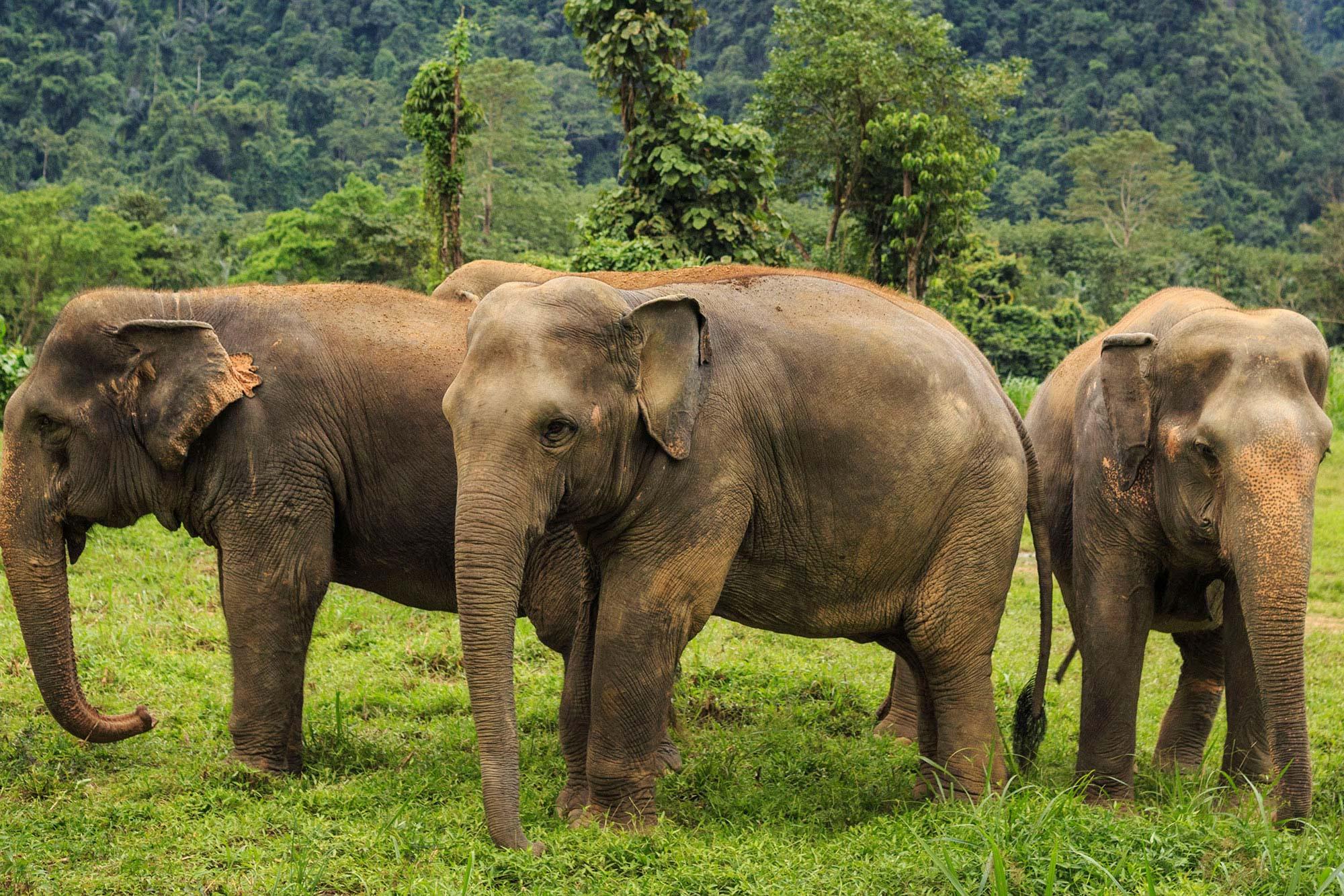 Khao Lak, Elephant Hills & Singapore Holidays
